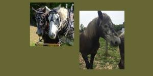 Horse class EB