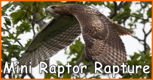 Mini Raptor Rapture_Facebook